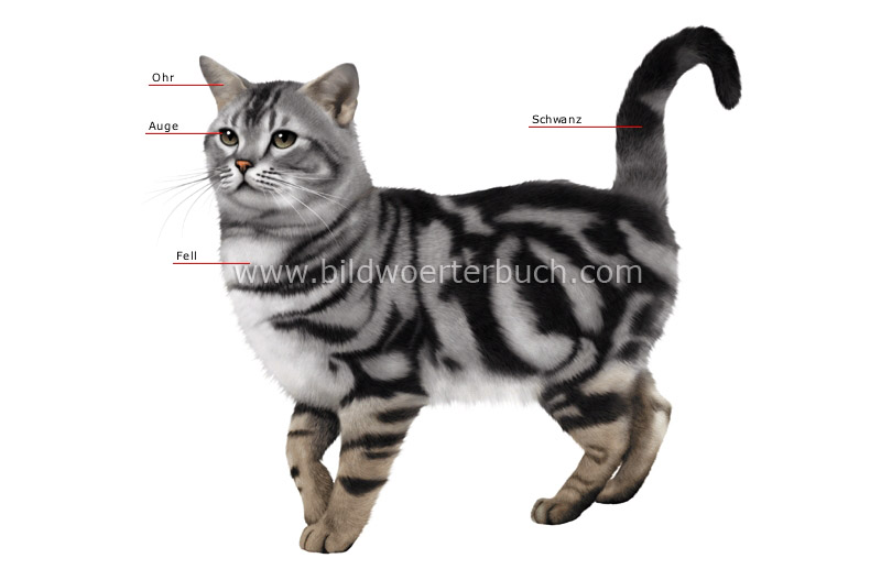 morphology of a cat image