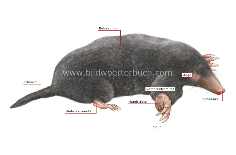 morphology of a mole image
