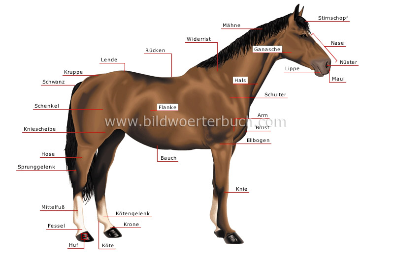 morphology of a horse image