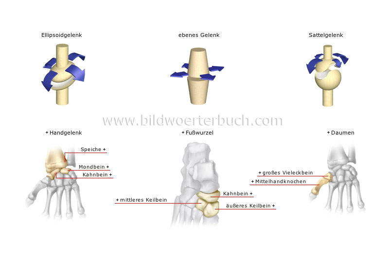 types of synovial joints image