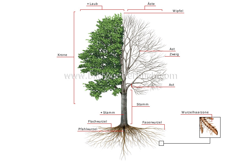 structure of a tree image