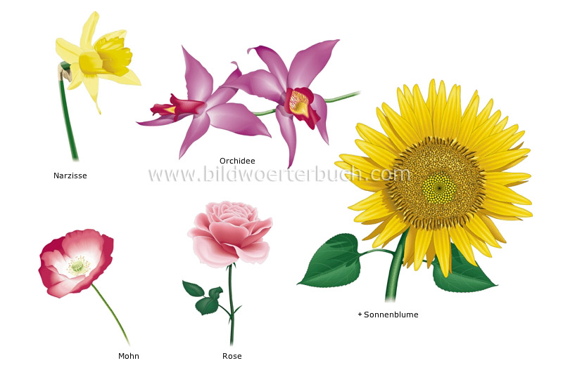 examples of flowers image