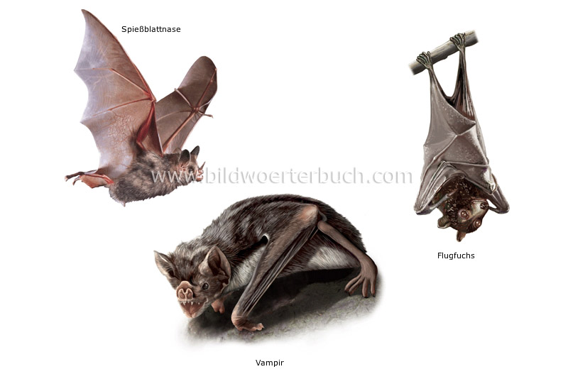examples of bats image