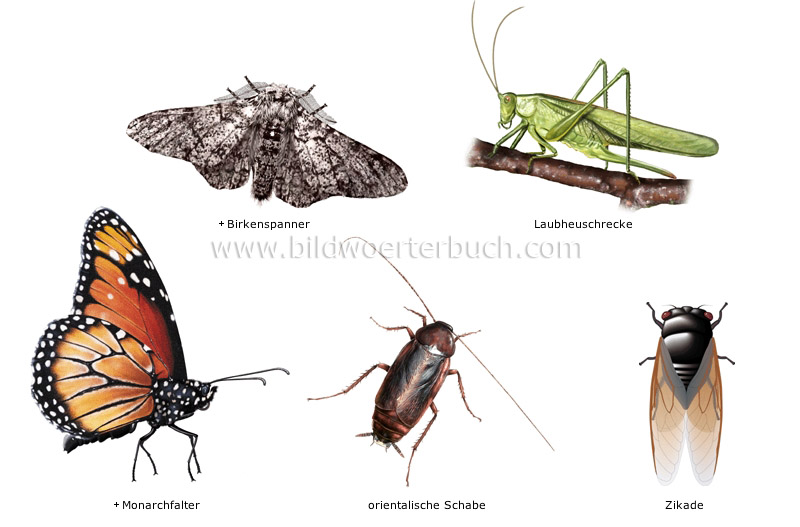 examples of insects image