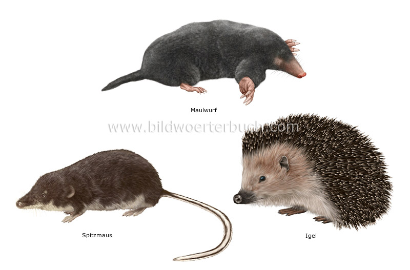 examples of insectivorous mammals image