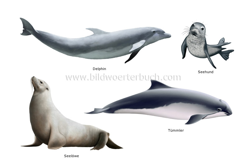 examples of marine mammals image