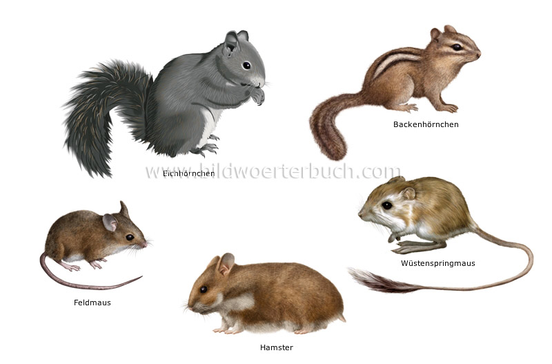 examples of rodents image