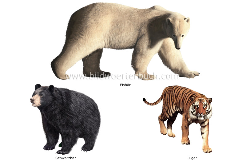 examples of carnivorous mammals image