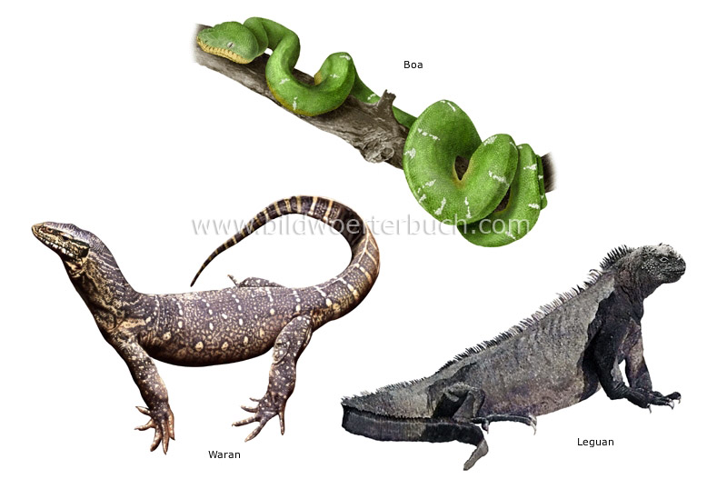 examples of reptiles image