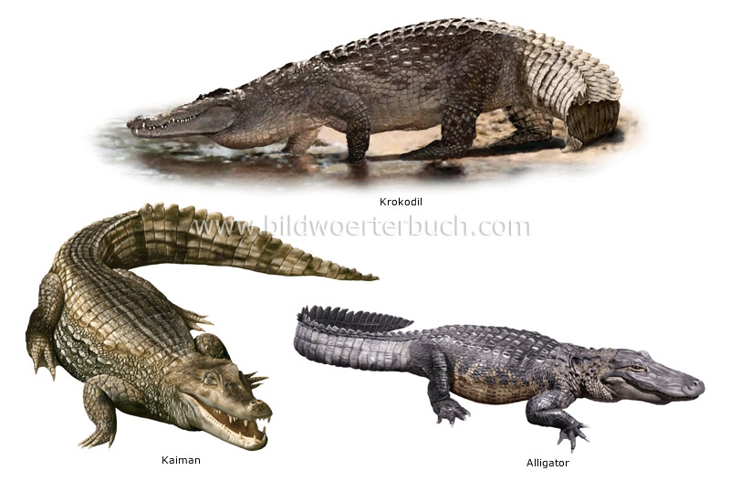 an analysis of the the animal species reptiles Vertebrate animals, including fish, amphibians, reptiles, birds and mammals, represent the a puny 3% of all living species the list below provides estimates of the number of species within the various animals groups.