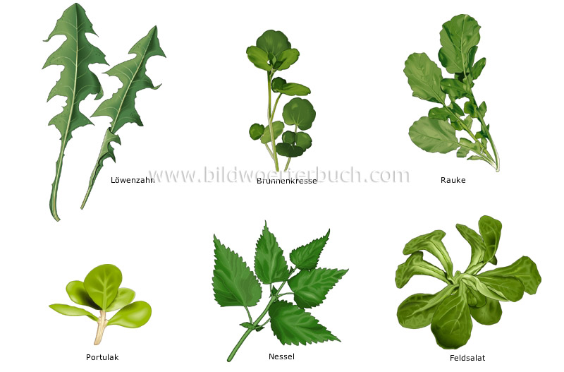 leaf vegetables image