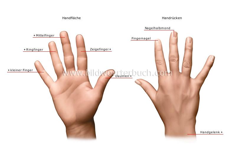 hand-127830.jpg