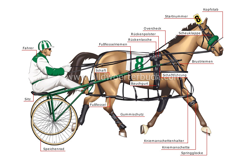 standardbred pacer image