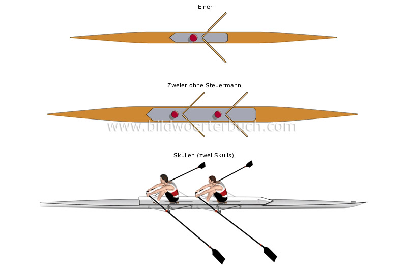 sculling boats image