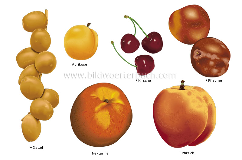 stone fruits image