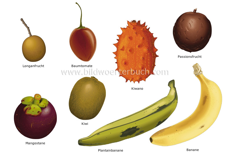 tropical fruits image