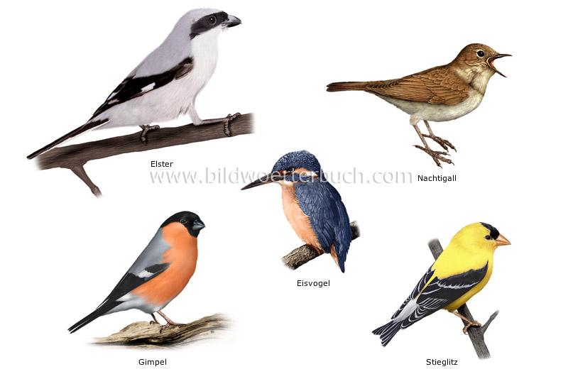 Examples Of Birds 2