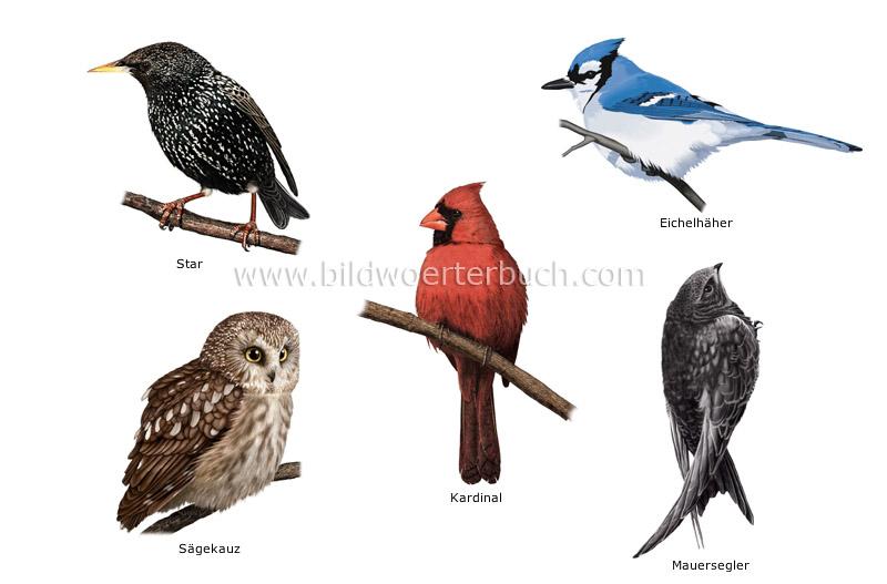 Examples Of Birds 3