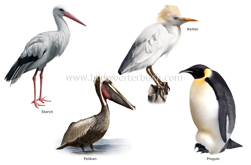 examples of birds image
