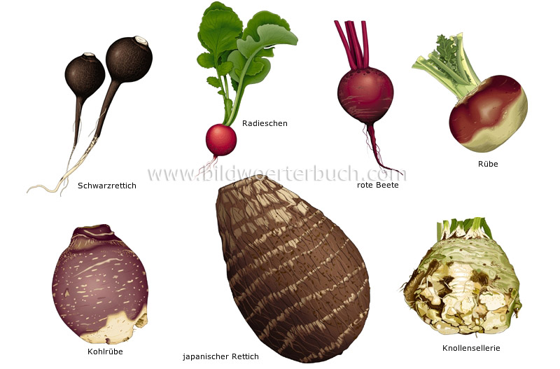 root vegetables image