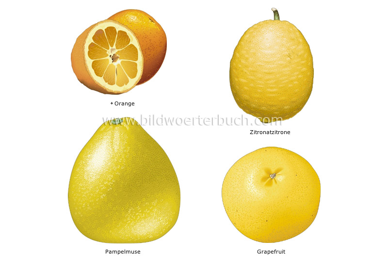 citrus fruits image