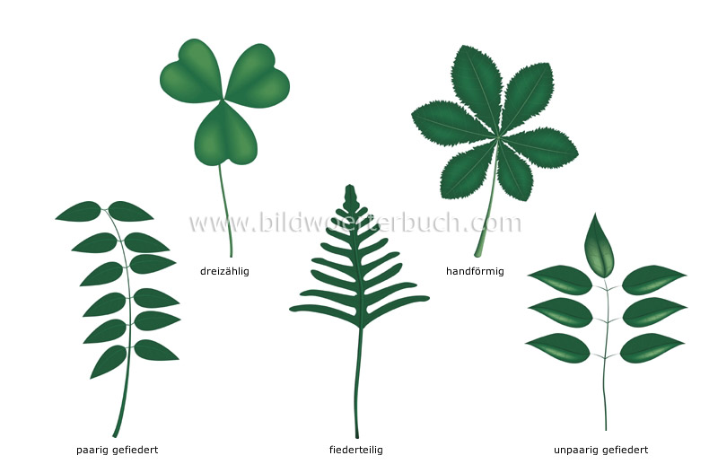 compound leaves image